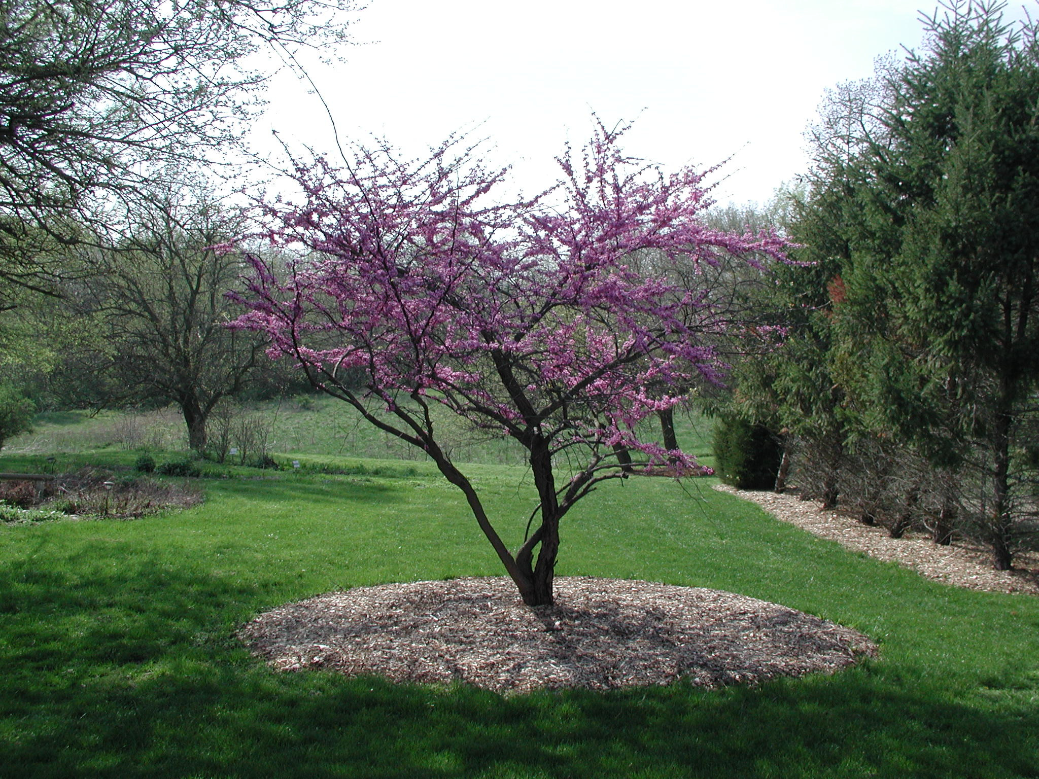 tree-in-bloom